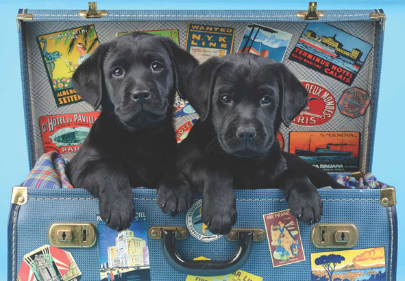 Travel Labs Dogs Jigsaw Puzzle