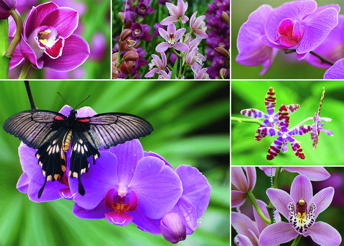 Holland Orchids Butterflies and Insects Jigsaw Puzzle
