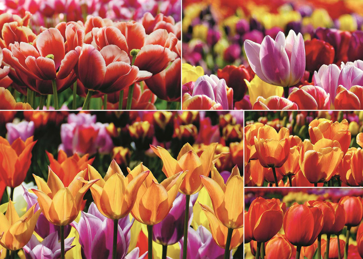 Holland Tulips Flowers Jigsaw Puzzle