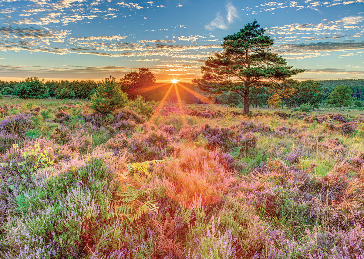 Heather at Sunset Landscape Jigsaw Puzzle