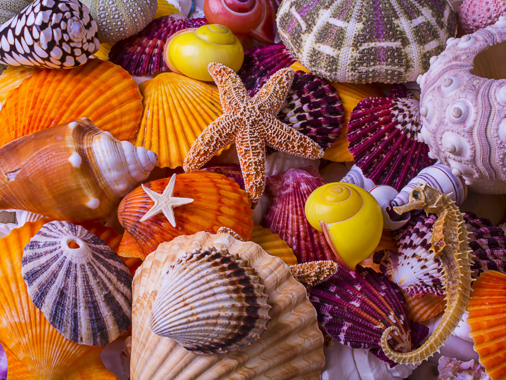 Sea Shell Treasures Beach Jigsaw Puzzle