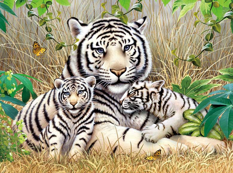 White Tiger Family 3 Tigers Jigsaw Puzzle