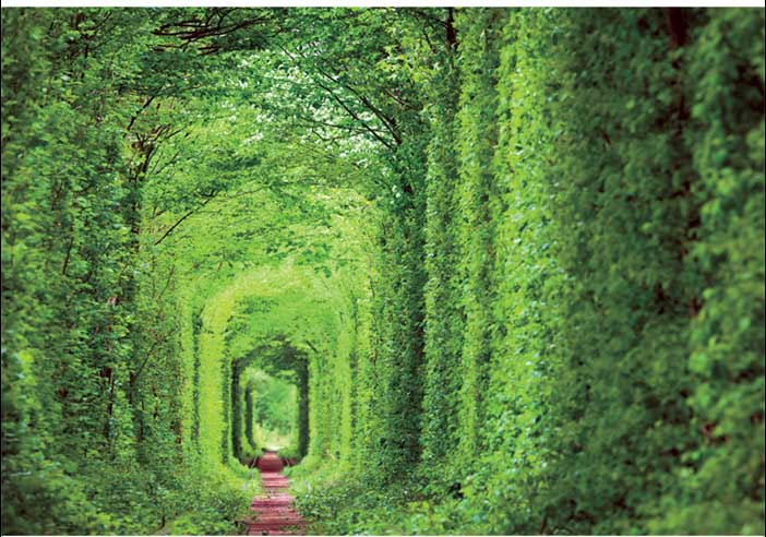 Tunnel Of Love Garden Jigsaw Puzzle