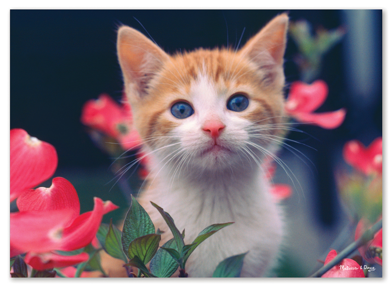 Curious Kitten - Scratch and Dent Cats Jigsaw Puzzle