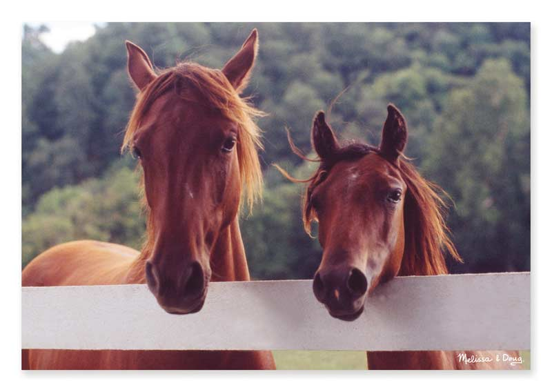 Horse Corral - Scratch and Dent Horses Jigsaw Puzzle