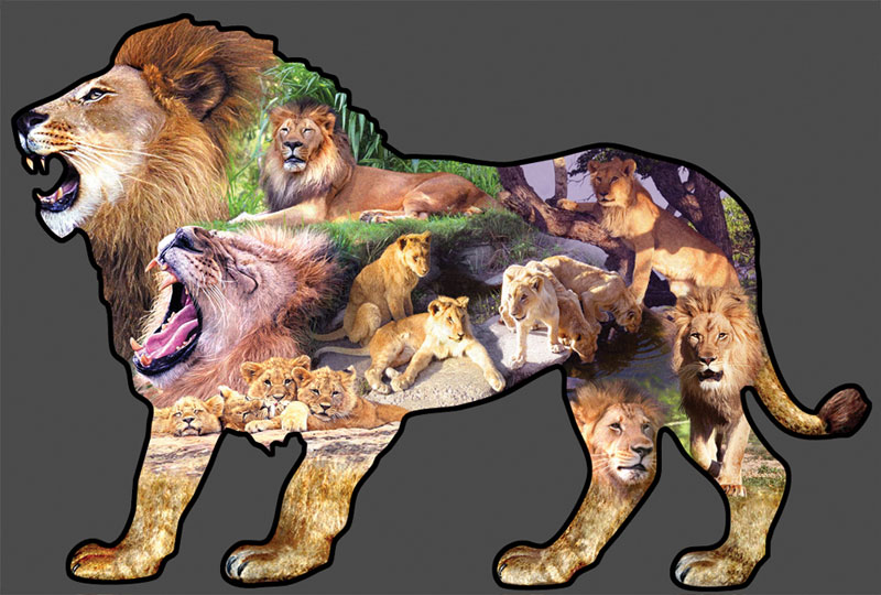 King of the Plains Jungle Animals Shaped