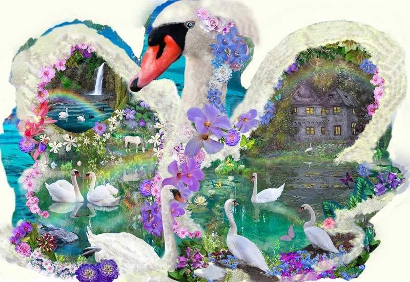 Swan Dreams Birds Jigsaw Puzzle