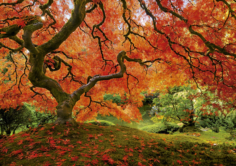 Japanese Gardens - Scratch and Dent Fall Jigsaw Puzzle