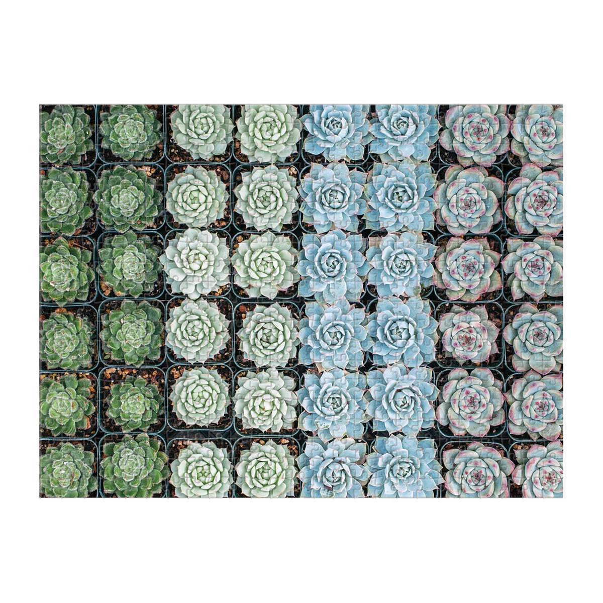 Succulent Garden Garden Jigsaw Puzzle