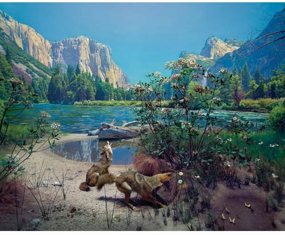 Coyote Diorama Mountains Jigsaw Puzzle