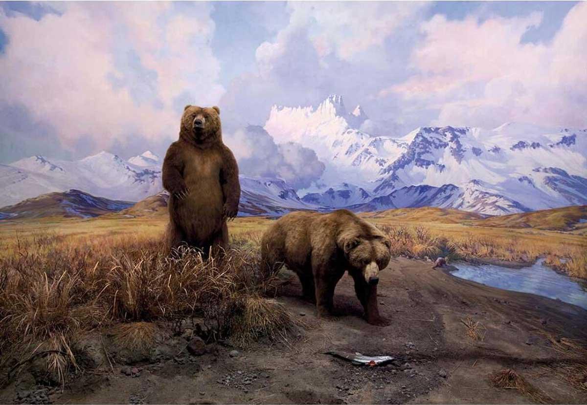 Alaska Brown Bear Diorama Bears Jigsaw Puzzle