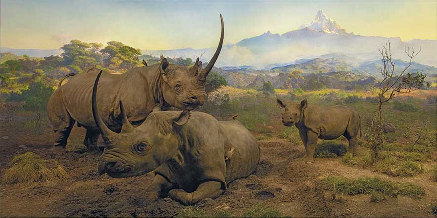 Black Rhinoceros Diorama Wildlife Jigsaw Puzzle