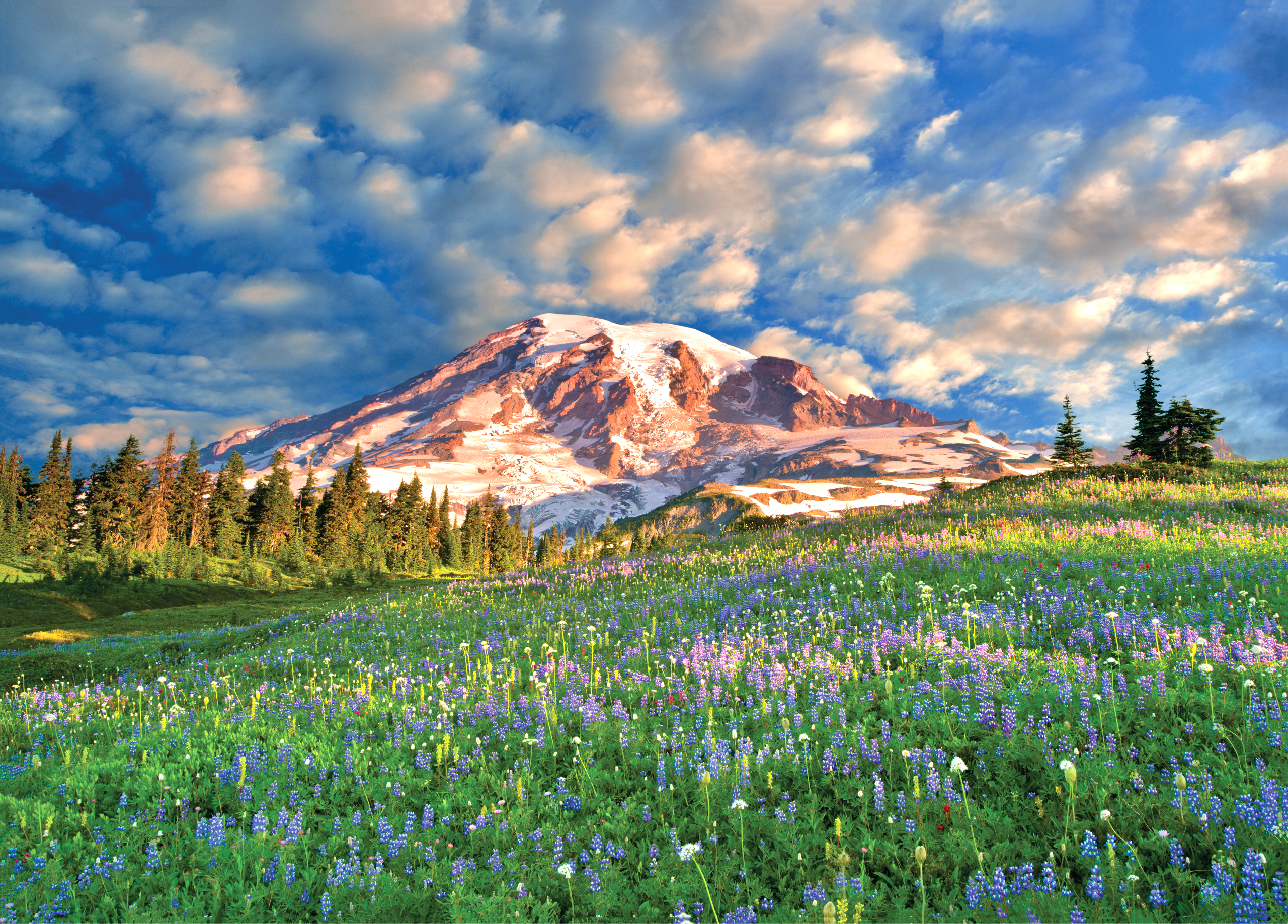Wildflowers at Mount Rainier Travel Jigsaw Puzzle