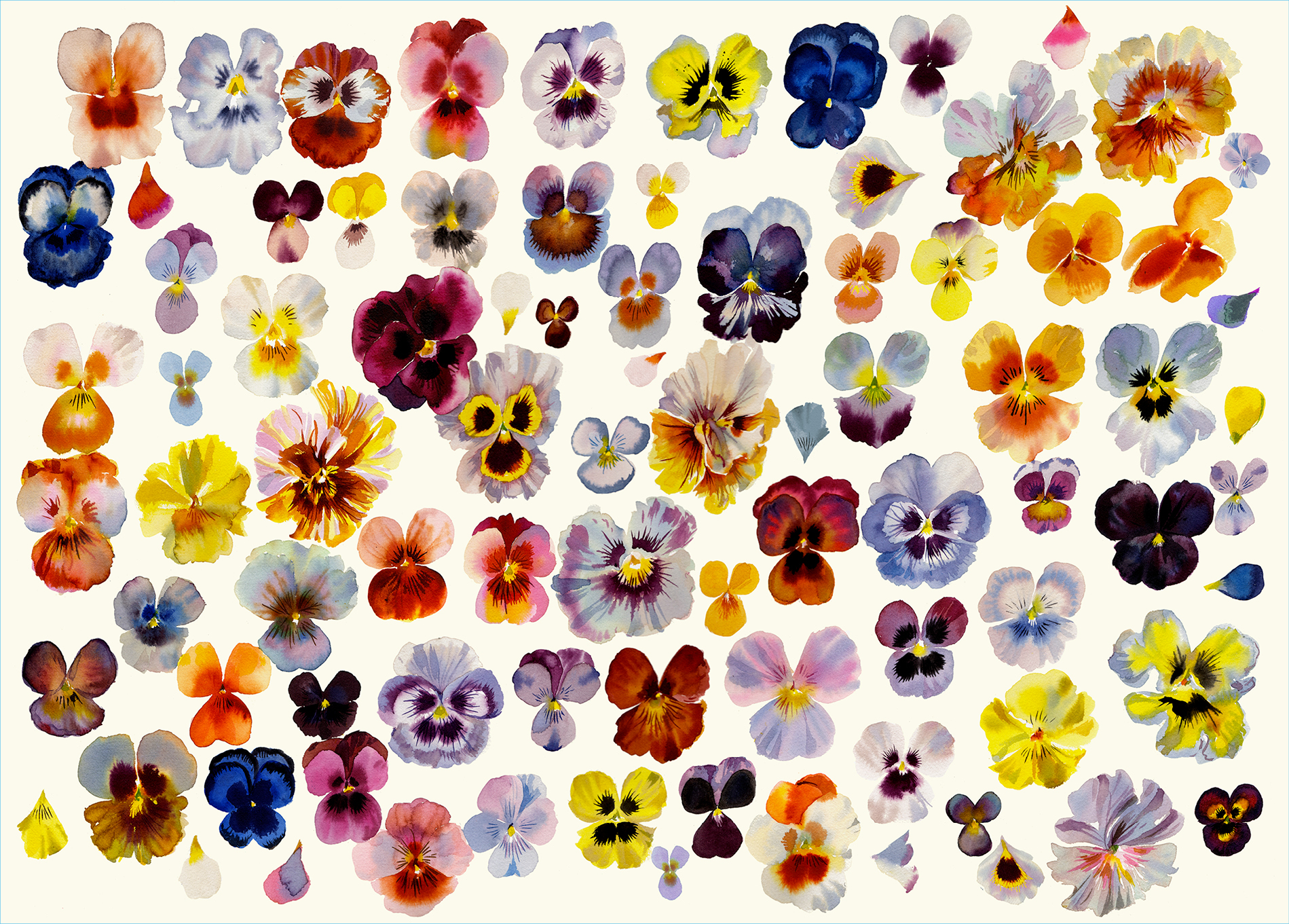 A Field of Pansies Flowers Jigsaw Puzzle