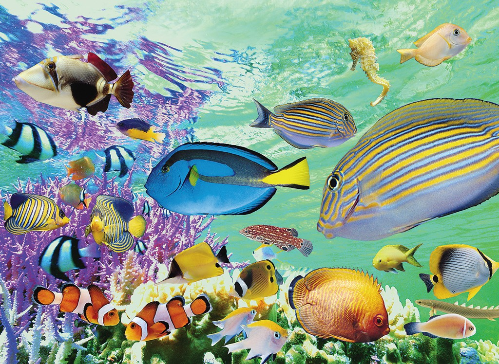 Tropical Marine Fish Jigsaw Puzzle