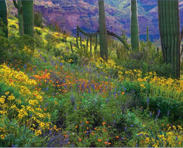 Wildflowers, Sierra Club Landscape Jigsaw Puzzle
