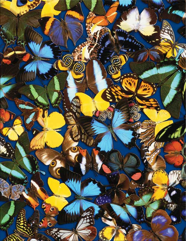 Butterfly Collection Butterflies and Insects Jigsaw Puzzle