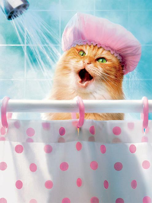 Shower Cat (Avanti) Cats Jigsaw Puzzle