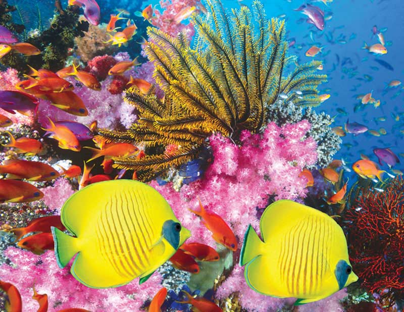 Coral Carnival Fish Jigsaw Puzzle