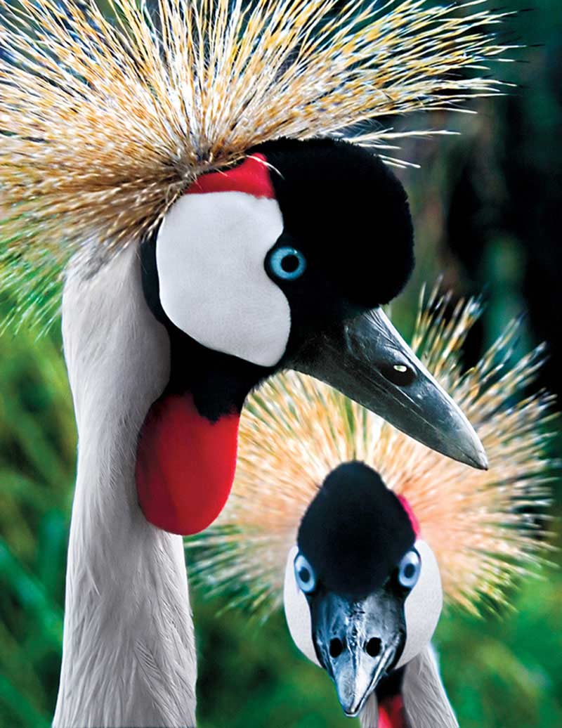Crowned Cranes Birds Jigsaw Puzzle