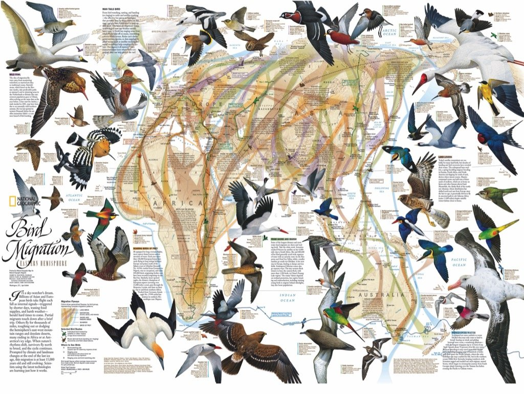 Eastern Bird Migration Birds Jigsaw Puzzle