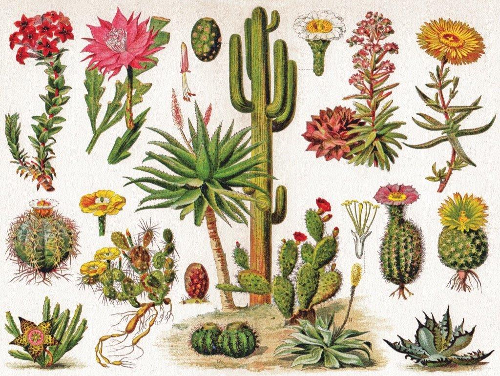 Cacti - Cactus Jigsaw Puzzle |...
