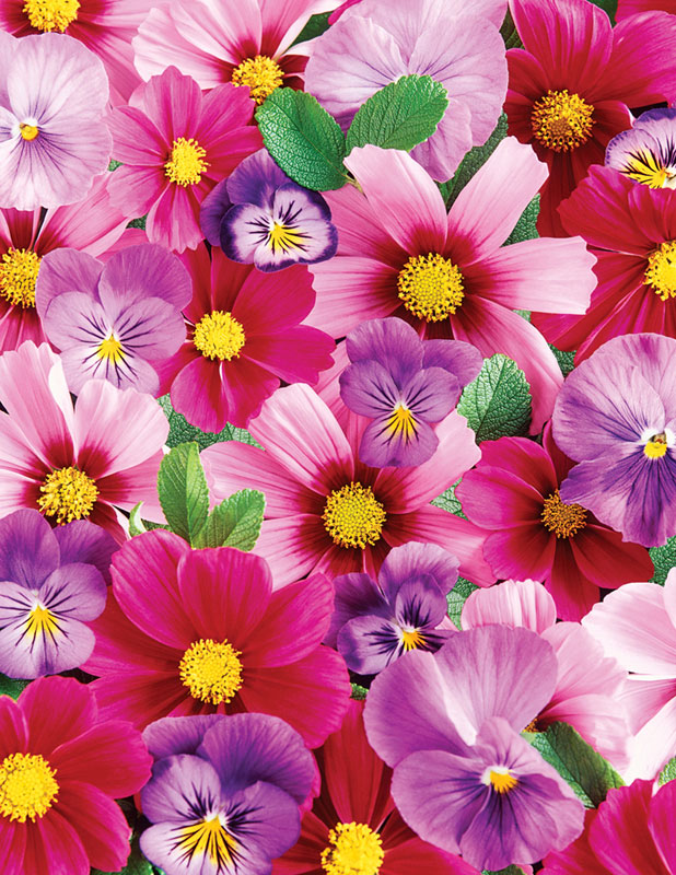 Pink N Purple Posies Flowers Children's Puzzles