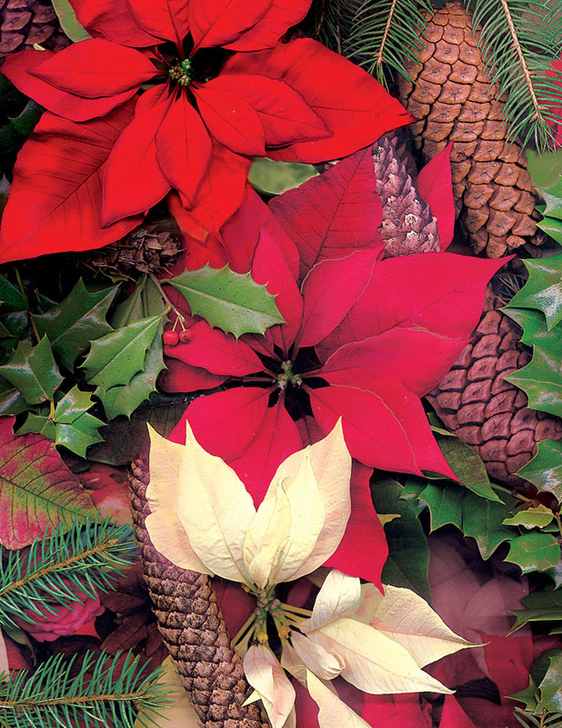 Puzzles to Remember - Poinsettias & Pine Cones Flowers Large Piece