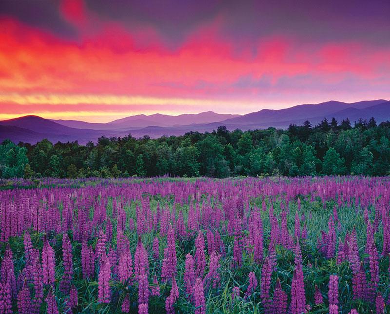 Purple Majesty Landscape Jigsaw Puzzle