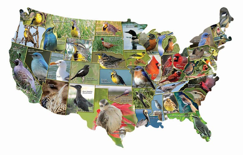 Official Birds of the States Birds Jigsaw Puzzle