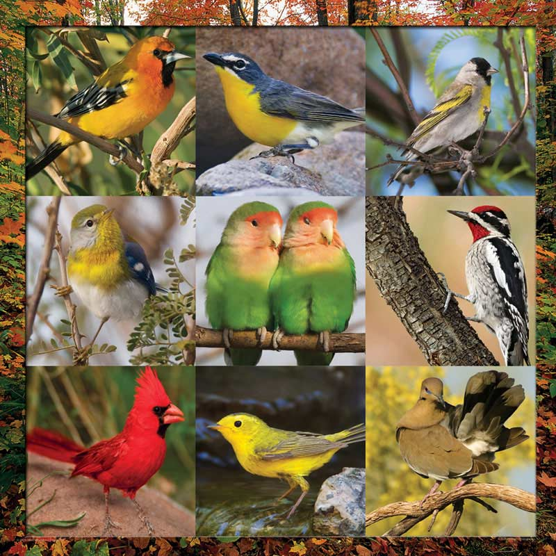 Song Bird Symphony Birds Jigsaw Puzzle