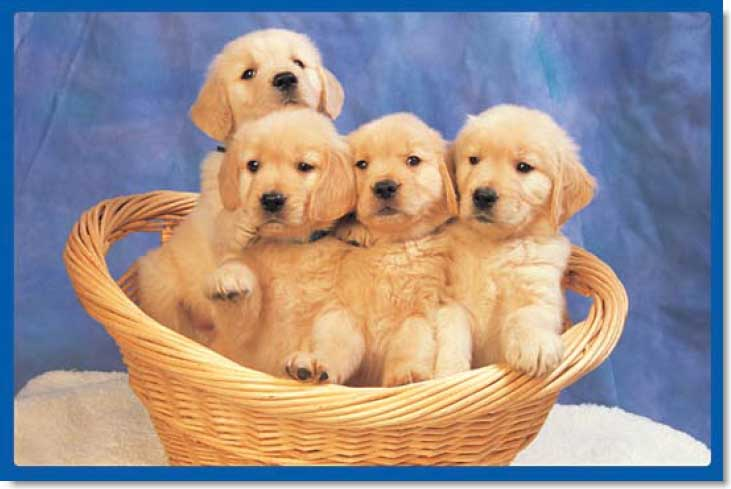 Little Doggies Dogs Jigsaw Puzzle