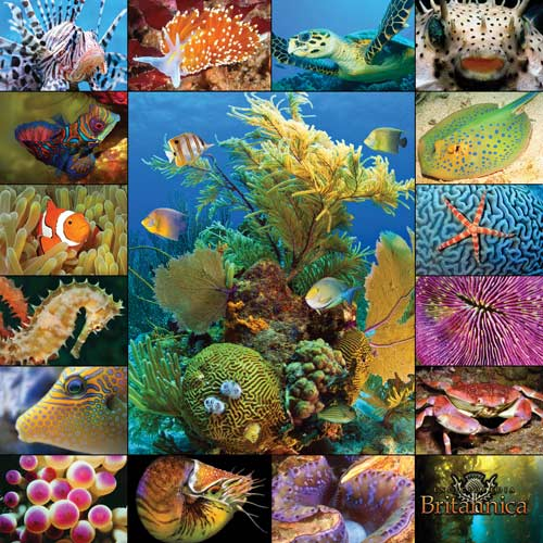 Aquatic Collection Under The Sea Jigsaw Puzzle