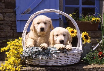 Basket of Puppies Dogs Jigsaw Puzzle