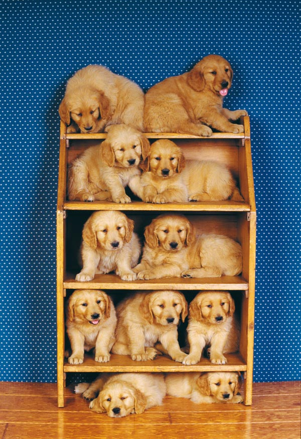 Dog friends Dogs Jigsaw Puzzle