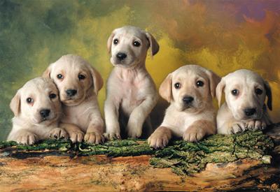 Labrador Retrievers Dogs Jigsaw Puzzle
