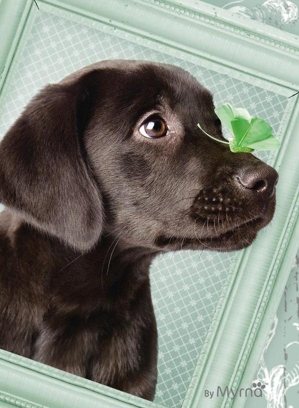 Lucky Puppy Dogs Jigsaw Puzzle