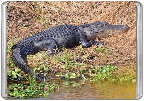 Alligator (Mini) Reptiles / Amphibians Jigsaw Puzzle