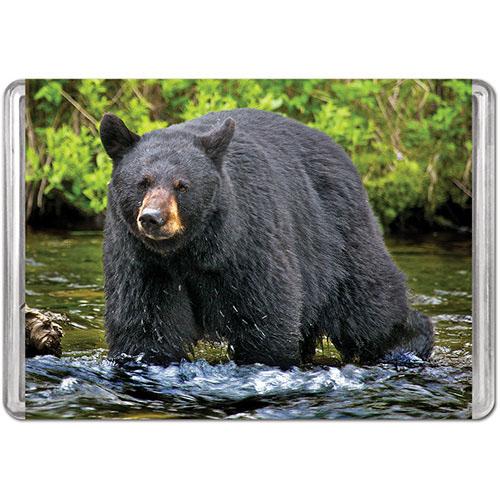 American Black Bear (Mini) Bears Jigsaw Puzzle