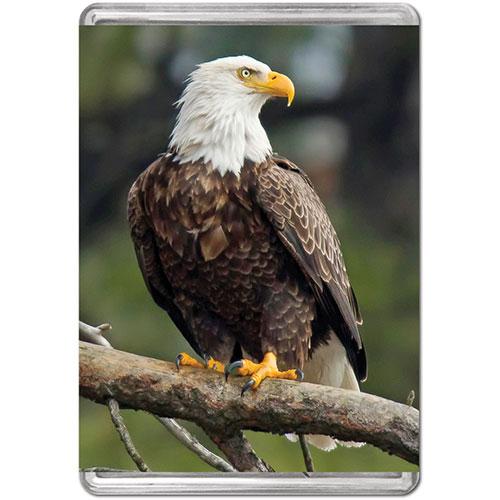 Bald Eagle (Mini) Birds Jigsaw Puzzle