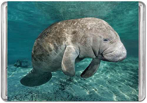 Manatee  (Mini) Animals Jigsaw Puzzle