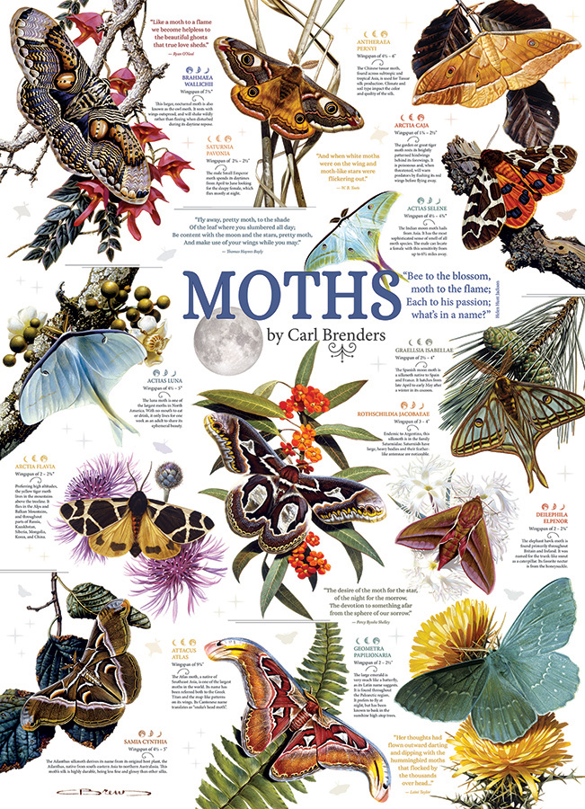 Moth Collection Butterflies and Insects Jigsaw Puzzle