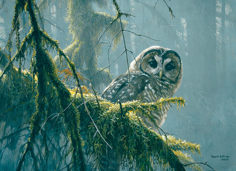 Mossy Branches - Spotted Owl Birds Jigsaw Puzzle