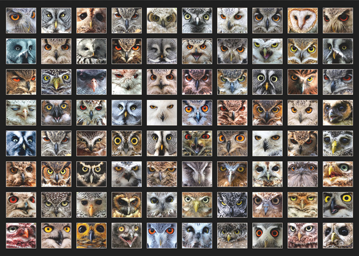 Owl Faces Animals Jigsaw Puzzle