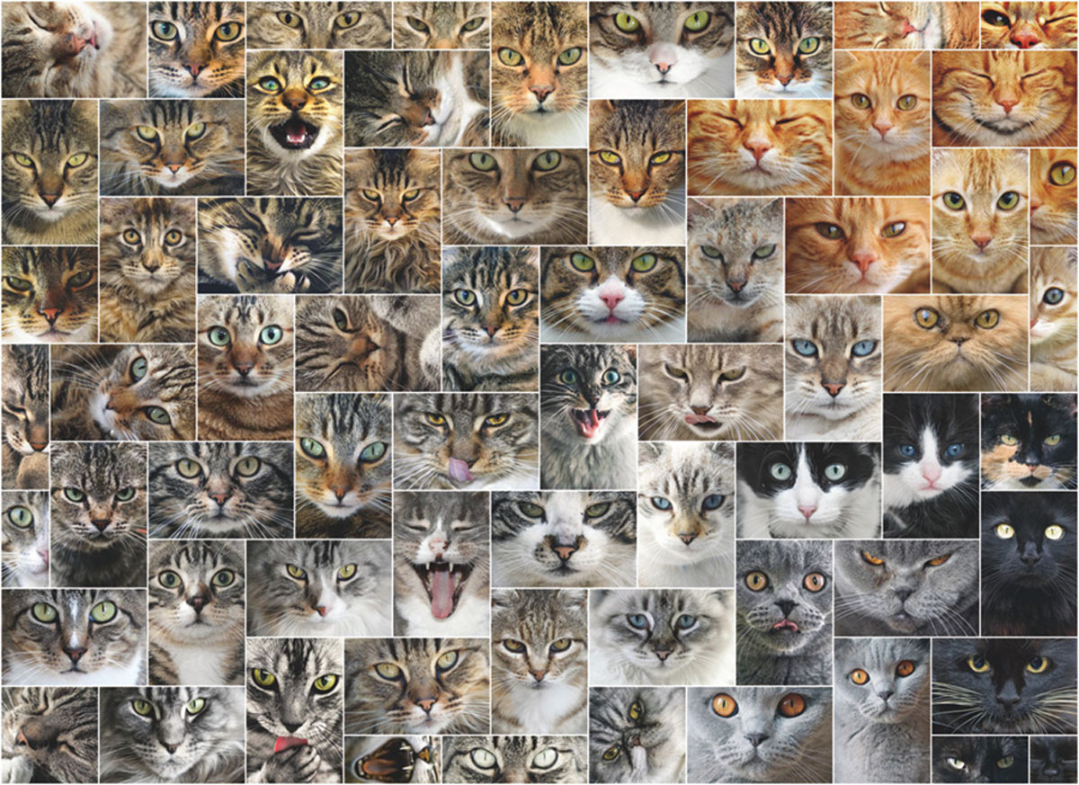Cat Faces Animals Jigsaw Puzzle