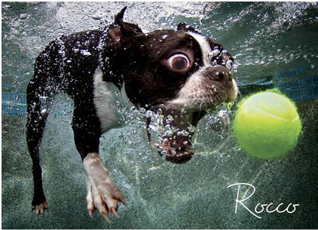 Underwater Dog: Rocco Dogs Jigsaw Puzzle