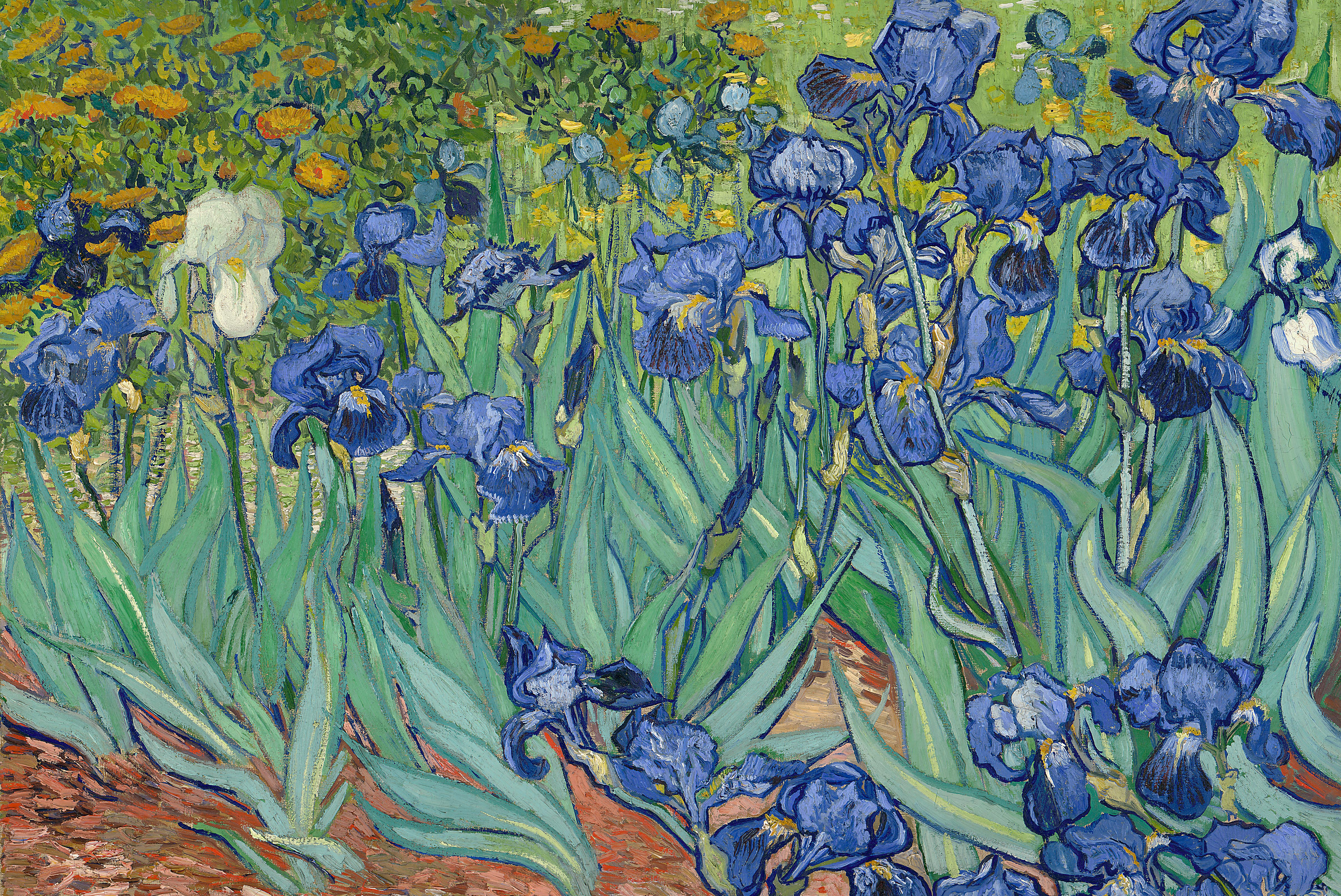 Irises in Garden by Van Gogh Fine Art