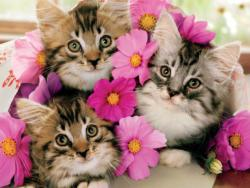 Kitten Bouquet Photography Large Piece