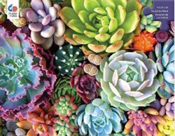 Succulent Synergy Flowers Large Piece