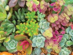 Bright Succulents Garden Large Piece
